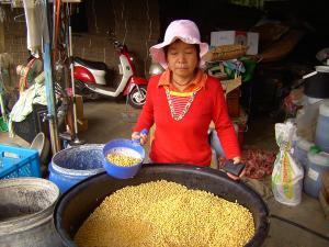 500公斤的大豆
